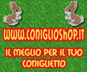 coniglio shop