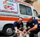Abbandono animali per andare in vacanza: reato punibile oltre che atto vigliacco e miserabile