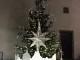 """Alberi di Natale: appello di Confagricoltura """"Acquistate alberi veri"""""""