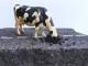 Le vacche di Hegel di Giuseppe Corianò