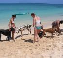Pensione del Comune contro abbandono estivo dei cani al Parco degli Animali di Ugnano
