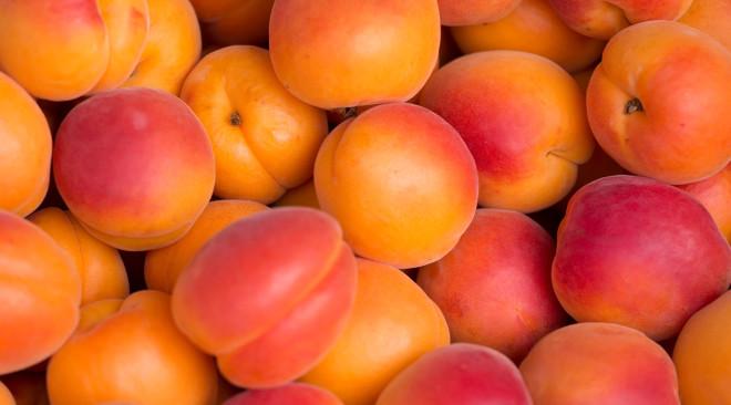 Ortofrutta: perso l'80% della produzione di albicocche a causa di ben 7 gelate in un mese