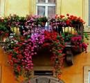 """Al Quartiere 5 concorso """"Balconi in fiore"""": domande entro il 31 marzo"""