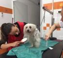 L'assessore Sara Funaro al lavoro alla toilette per cani