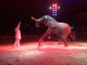VIDEO – Lo spettacolo del Circo Medrano a Firenze per le feste natalizie 2018