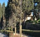 140 nuovi alberi piantati nel Quartiere 2