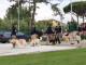 Il Parco degli animali cresce ancora: vasca per addestramento cani da salvataggio e presto i matrimoni