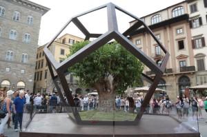 Albero in piazza Signoria 7